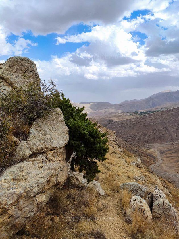 درختچه اورس و رشد آن در میان سنگ ها
