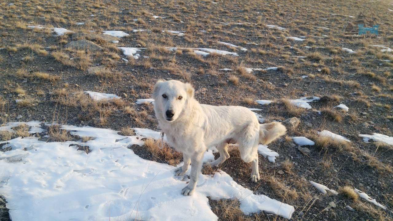 سگ عبدالرحمان در دره قوزلو