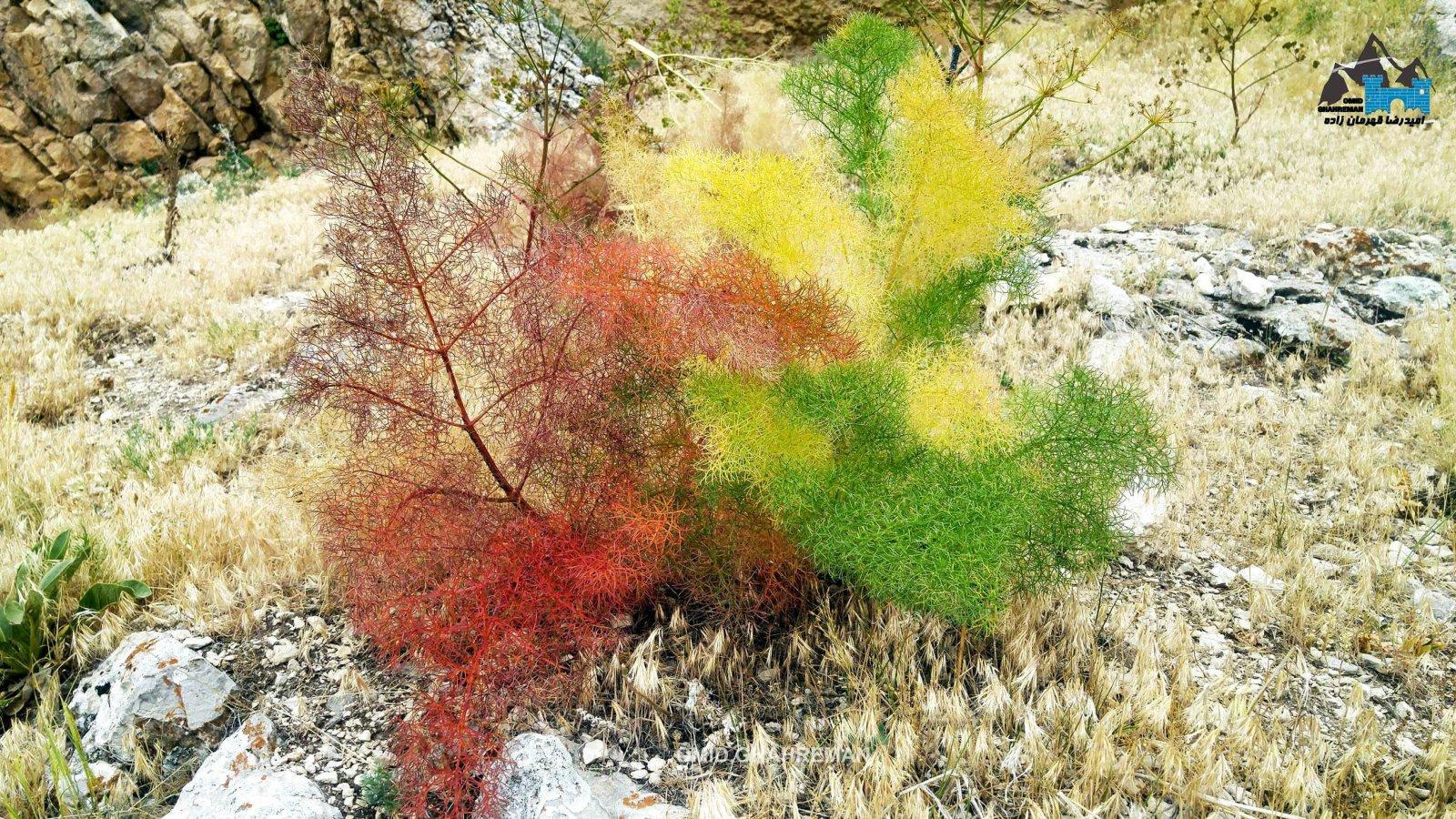 مجموعه بی نظیر از گیاهان و طبیعت ماکو