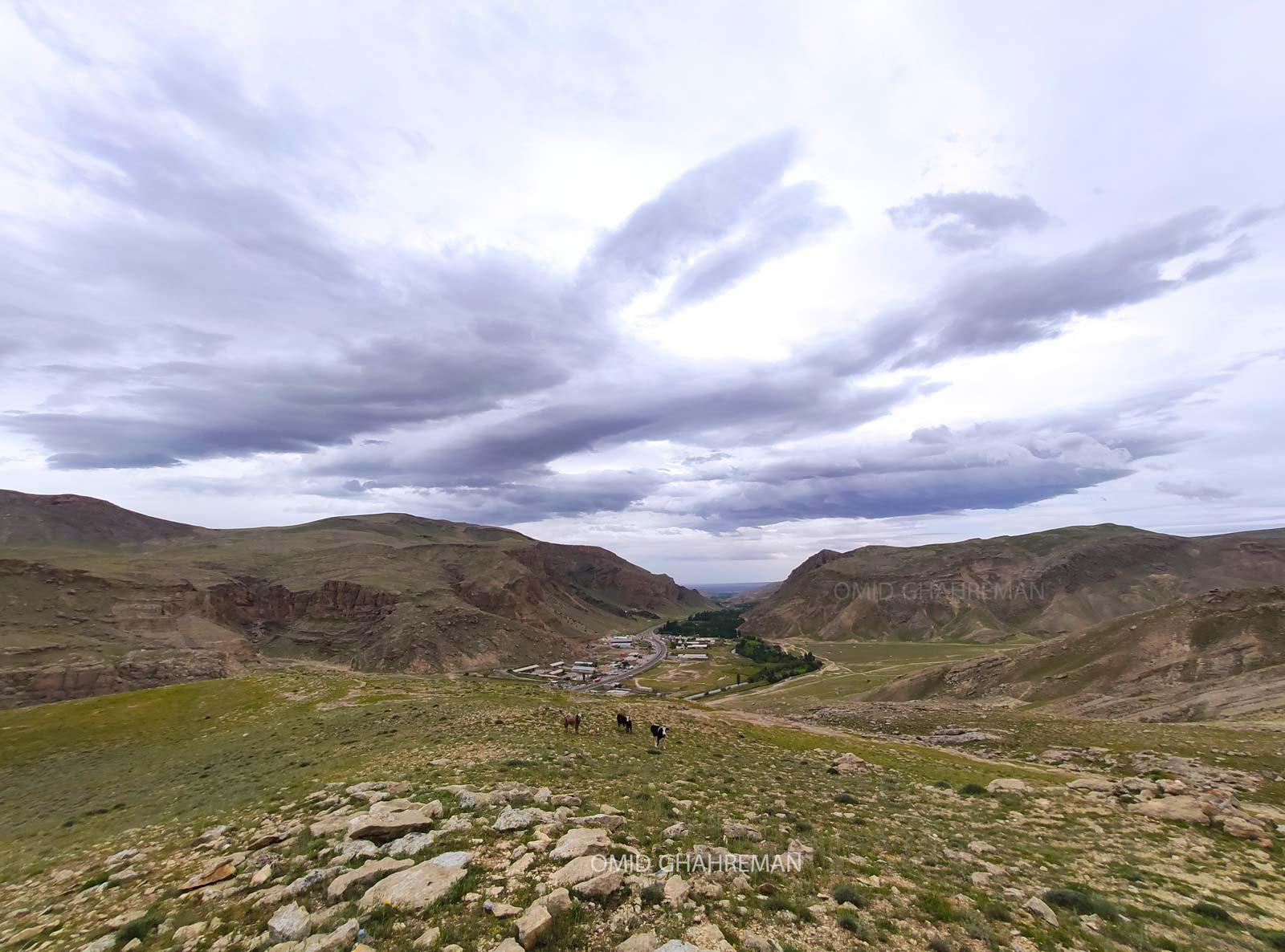 چرای گاوها در ارتفاعات بش گوز