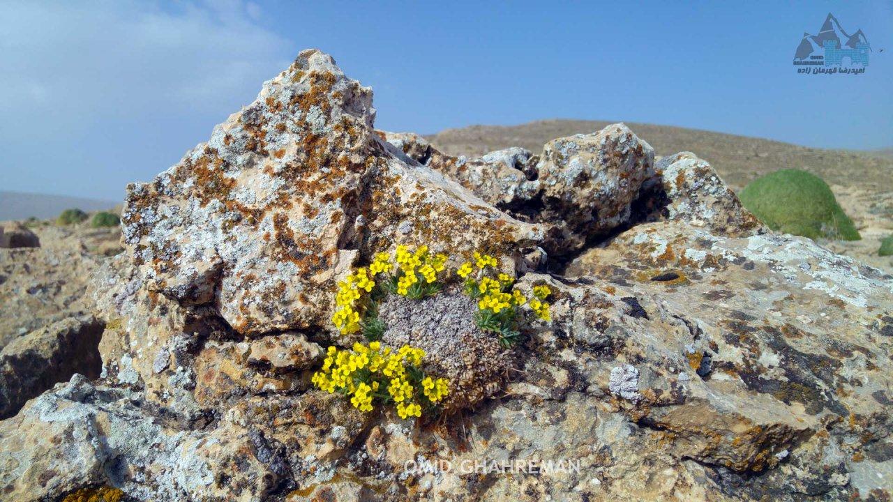گل بر روی سنگ ها