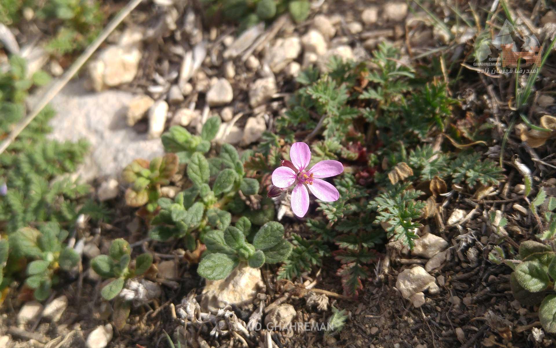 گل ها و طبیعت بالای کوه قیه