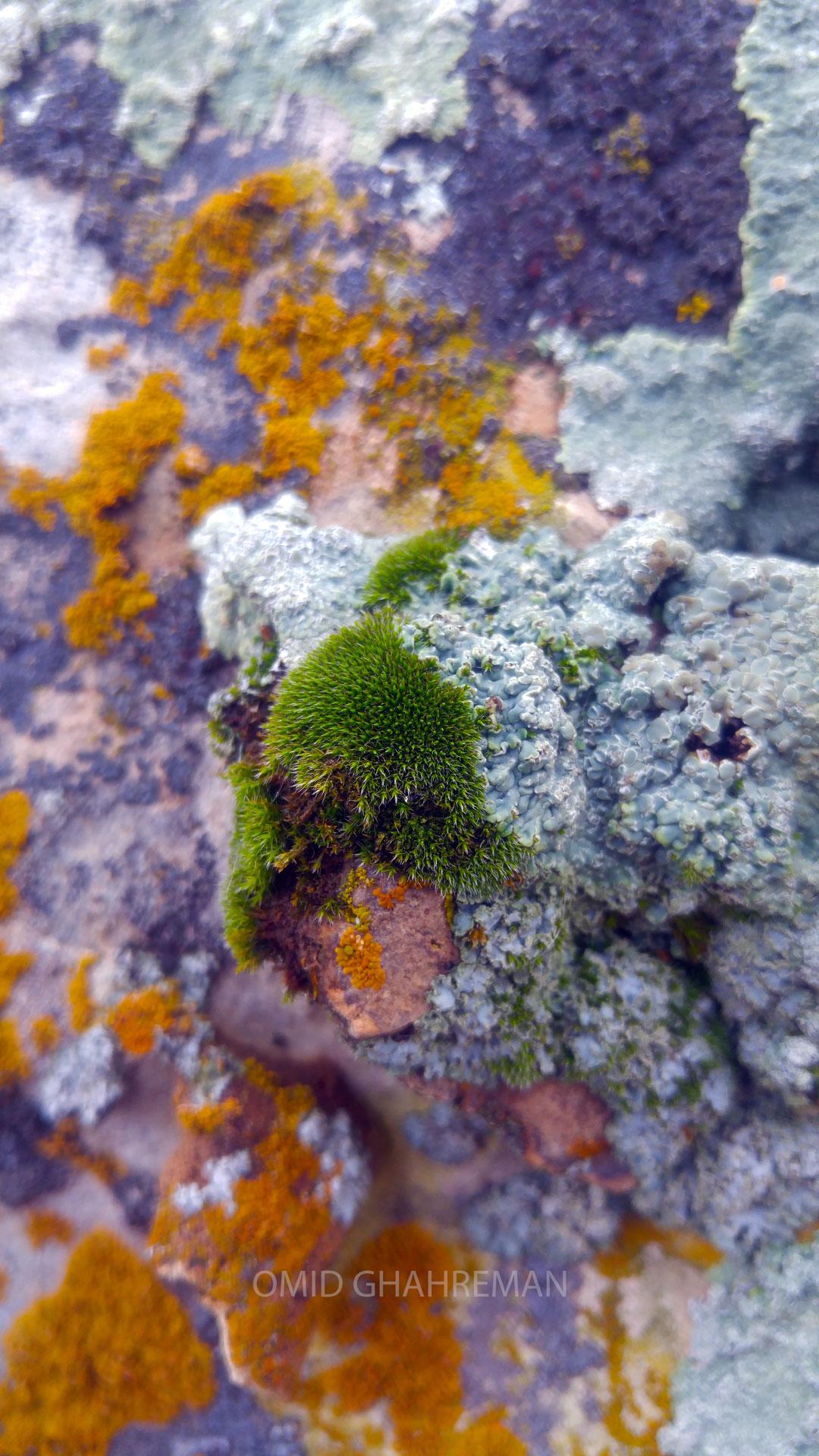 زیبایی بر روی سنگ ها