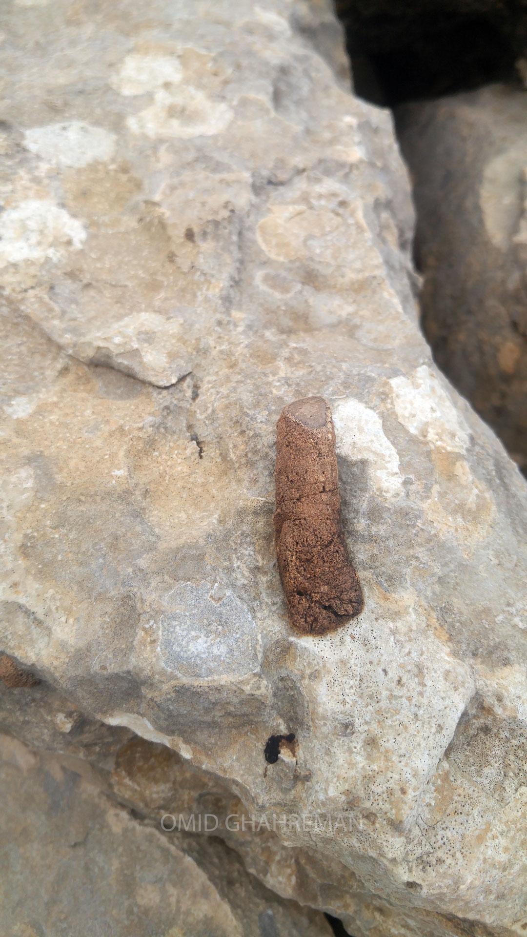 فسیل چوب در کوهستان ماکو